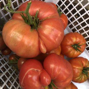 Fresh Heritage Tomatoes